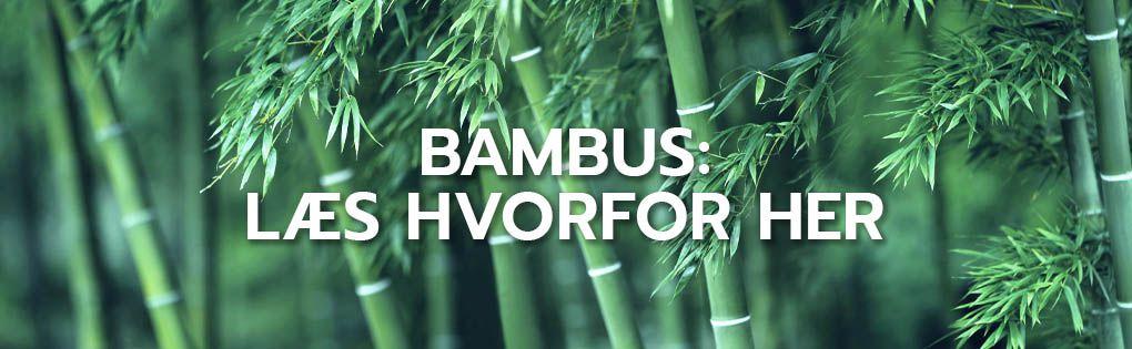 Bambus: læs hvorfor her