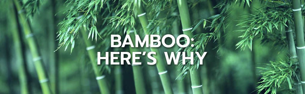 Bamboo: here's why