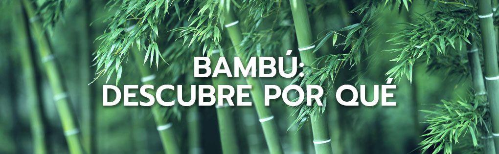 Bambú: descubre por qué