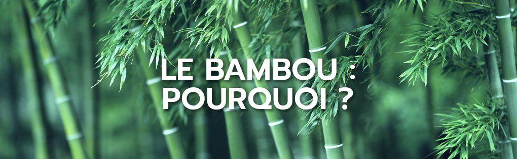 Le bambou : pourquoi ?