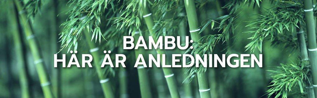 Bambu: här är anledningen
