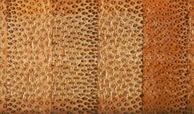 El material del bambú